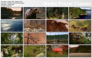 Thumbnail Nordic Wild - Reborn