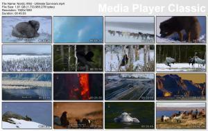 Thumbnail Nordic Wild - Ultimate Survivors