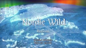 Nordic Wild - Reborn